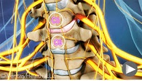 cervical spine anatomy video