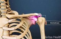 acromioclavicular joint video
